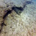 avidag free dive course 4