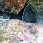 avidag free dive course 7