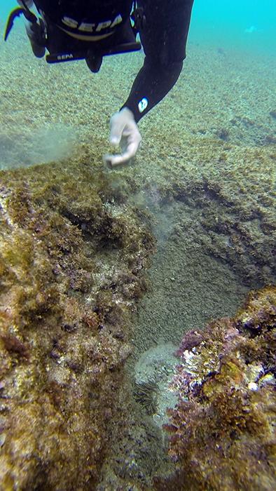 avidag freedive 10 25-1-2014