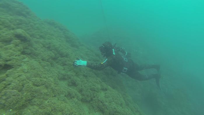 avidag freedive 3 26-1-2014
