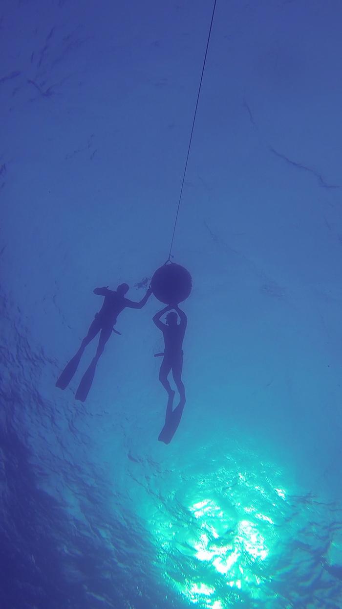 avidag freedive 9 25-1-2014