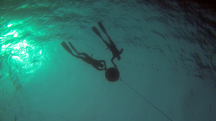 avidag freedive6 25-1-2014