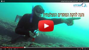 avidag freediving dragon reef
