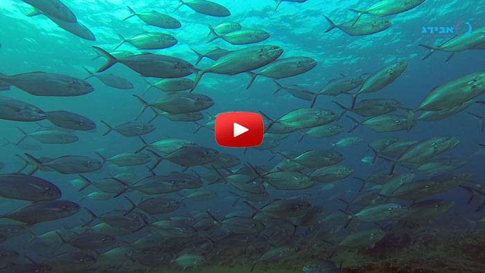 bluefin-tuna-avidag-freediving-course-1