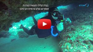 freediving ecological survey spring2015