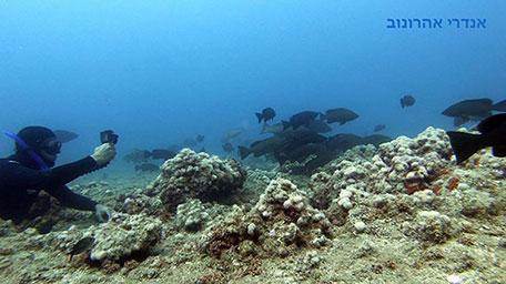 צילום והכרת הסביבה התת ימית